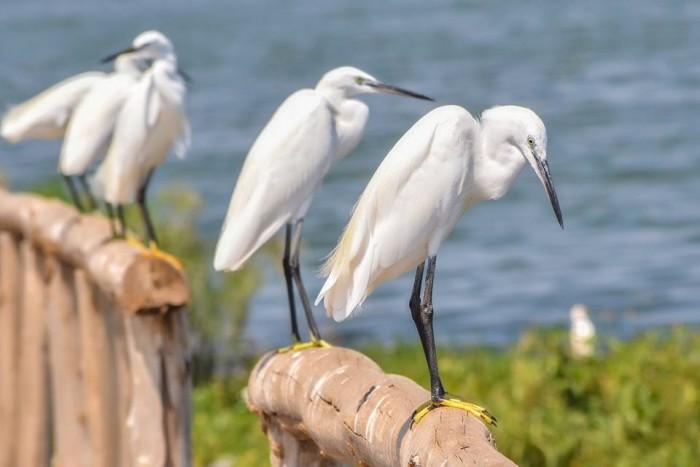 Birds at One Love Beach Busabala