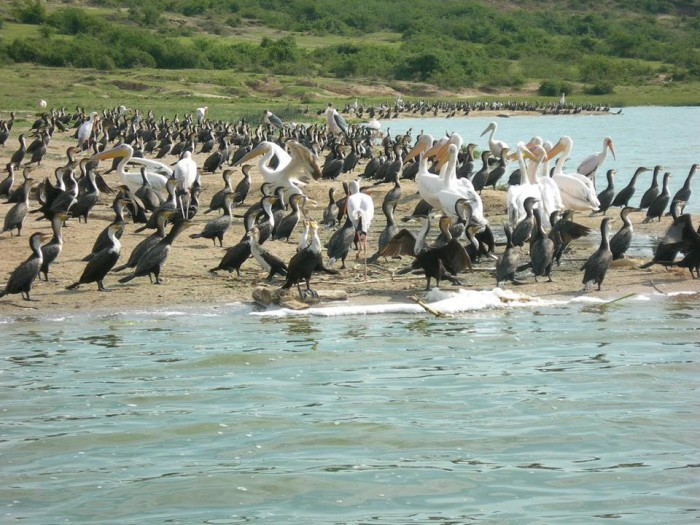 The beautiful birds from East Africa