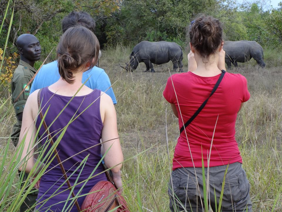 Tourists watching rhinos in one of Uganda's national parks